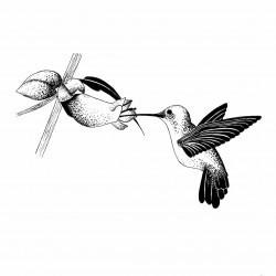 dessin noir et blanc colibri