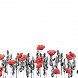 illustration of poppies and...