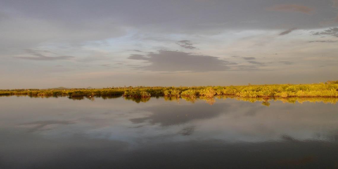 Sunset on mangroove, Cambodia