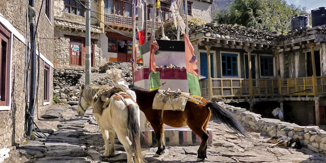 Horses of Mustang