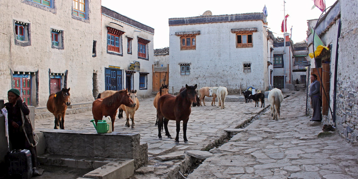 Mustang horses in Lo Manthang